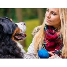 €29 Canine Behaviour Training Diploma Course