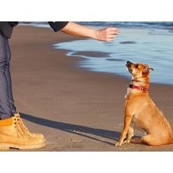 €29 Puppy Training Diploma Course