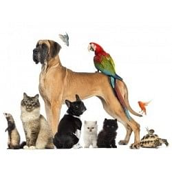 €29 Pet Care Business Diploma Course
